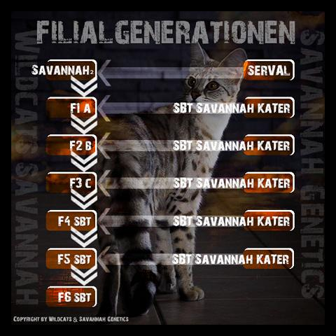 Filialgeneration